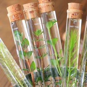 (水草)シリンダーウォータープランツ 単品(1本) ボトルアクア