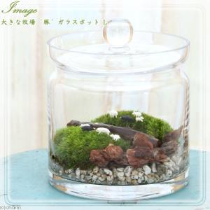 (観葉植物)苔Terrarium 大きな牧場 豚 ガラスポットL 説明書付 テラリウムキット 本州・四国限定