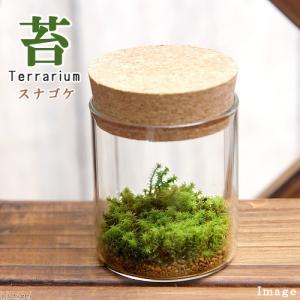 (観葉植物)苔Terrarium スナゴケ コルクボトル ミニ 説明書付 テラリウムキット 本州・四国限定