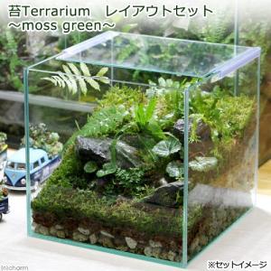 (観葉植物)苔Terrarium レイアウトセット 〜moss green〜 説明書付|chanet