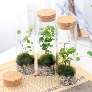 メーカー:用品+生体植物セット メーカー品番: _aqua koketera _interior _...