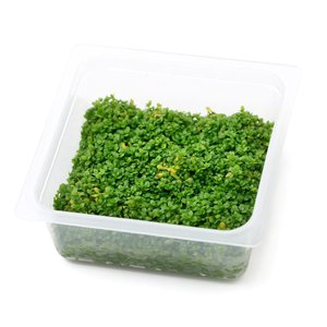 (水草)オリジナル組織培養 キューバパールグラス(無農薬)(1カップ)