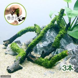 (水草)巻きたて ウィローモス スティック流木 Sサイズ(約15cm)(無農薬)(3本) 北海道航空...