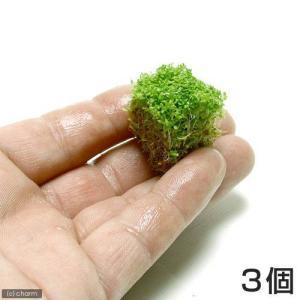 (水草)キューバパールグラス(水上葉) キューブタイプSサイズ(約2cm)(無農薬)(3個) 北海道...