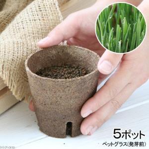 (観葉植物)長さで選べる ペットグラス 直径8cmECOポット植え(発芽前)(無農薬)(5ポット) 猫草 chanet
