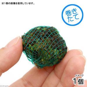 (水草)巻きたて ベトナムクローバーボール(無農薬)(1個)