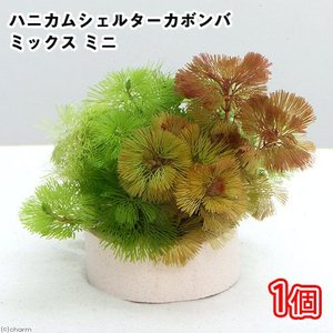 (水草)メダカ・金魚藻 ハニカムシェルター カボンバミックス ミニ(1個) 北海道航空便要保温|chanet