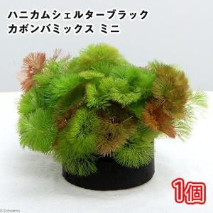 (水草)メダカ・金魚藻 ブラックハニカムシェルター カボンバミックス ミニ(1個) 北海道航空便要保温|chanet