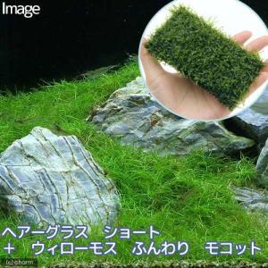 メーカー:草■0〜30 メーカー品番: amazonso 熱帯魚 _aqua ビギナーにお勧め 水草...