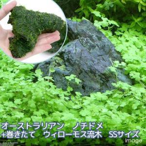 メーカー:草■0〜30 メーカー品番:【1ポット分 10cm前後】 熱帯魚 _aqua ビギナーにお...