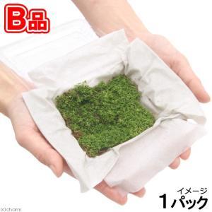 (水草)お一人様3点限り(B品)キューバパールグラス(水上葉)(無農薬)(1パック)