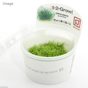 (水草)組織培養1−2−GROW! ウォーターローン トロピカ製(無農薬)(1カップ) 北海道航空便要保温|chanet