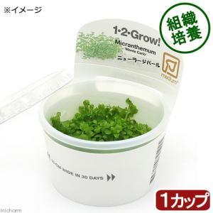 明るい緑色で丸葉が大変美しい種です。 1−2−GROW!(ニューラージパールグラス) 販売名 1−2...