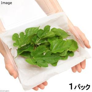 採れたて クワの葉 うさぎ リクガメのおやつ 国産(無農薬)(1パック)