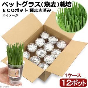 (観葉植物)ケース売り 種まき済み ペットグラス栽培 ECOポット 燕麦 12ポット入り|chanet