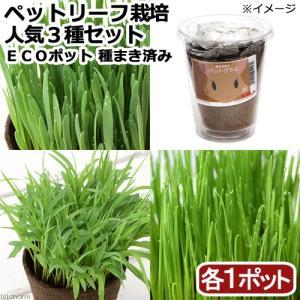 (観葉植物)種まき済み ペットリーフ栽培 ECOポット 人気3種セット(3ポットセット)|chanet