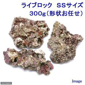 (海水魚)ライブロック SSサイズ(300g)(形状お任せ)