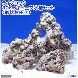 (海水魚)ライブロック 30cmキューブ水槽セット (1セット)(形状お任せ) 北海道航空便要保温