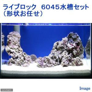 (海水魚)ライブロック 6045水槽セット (1セット)(形状お任せ) 沖縄別途送料 北海道航空便要保温