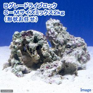 (海水魚)Bグレードライブロック S−Mサイズミックス(2kg)(形状お任せ) 北海道航空便要保温 chanet