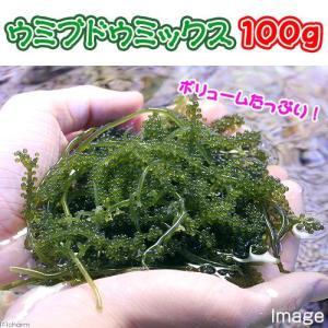 (海水魚 海藻)生餌 ウミブドウミックス グラム売り 100...