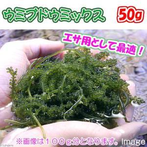 (海水魚)海藻 生餌 ウミブドウミックス グラム売り 50g 北海道・九州航空便要保温