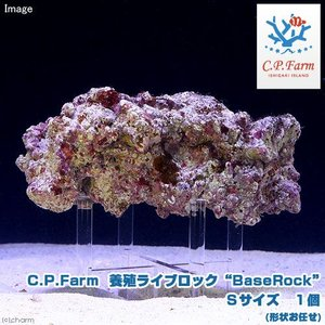 "C.P.Farm直送 石垣島産 養殖ライブロック""BaseRock"" Sサイズ 1個(形状お任せ)(0.24個口相当)別途送料|chanet"