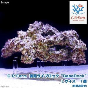 "C.P.Farm直送(海水魚)石垣島産 養殖ライブロック""BaseRock"" Lサイズ 1個(形状お任せ)(0.5個口相当)別途送料|chanet"