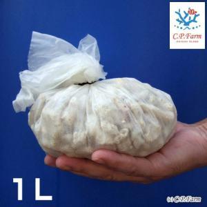 生産者直送 バクテリア着き熟成ろ材 XLサイズ 1リットル(0.24個口相当)別途送料|chanet