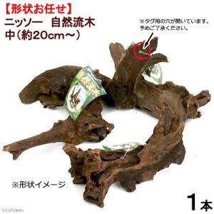 形状お任せ 自然流木 中(約20cm〜) 1本 関東当日便|chanet