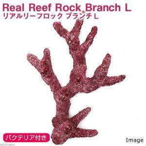 (海水魚)Real Reef Rock Branch(リアルリーフロックブランチ) バクテリア付き Lサイズ(1個)(形状お任せ)|chanet