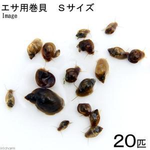 メーカー:■15〜25 メーカー品番: ikika_im muryotassei_800_899 _...
