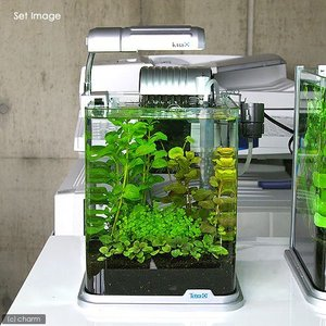 状態の良い水草、4種セット! (水草)おまかせ水上葉 レイアウトセット 20cm水槽用 4種(無農薬...
