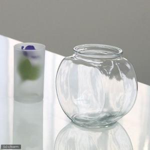 おしゃれなガラス製金魚鉢 太鼓鉢 小(1.2リットル) 関東当日便|chanet