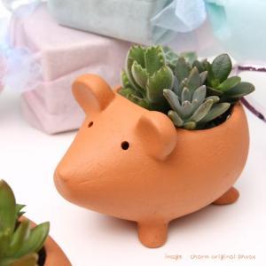 可愛い動物テラコッタポットでプクプク多肉を楽しもう! 育てやすく、気軽に楽しめる多肉植物の寄せ植えで...