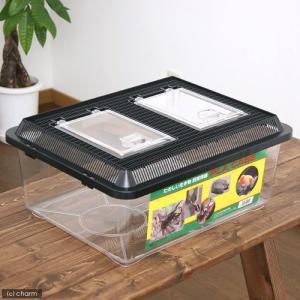 飼育容器 特大フラット 黒(430×340×190mm) プラケース 虫かご 昆虫 お一人様4点限り