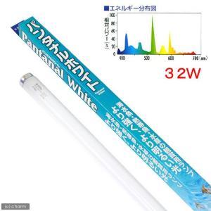 メーカー:スドー メーカー品番:S-3632 梱包時要詰め物 ▼▲ アクアリウム用品 _aqua k...