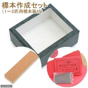 標本作成セット(1〜2匹用標本箱付き) 関東当日便 chanet