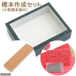 標本作成セット(小型標本箱付き) 昆虫 標本用品 標本セット 関東当日便 chanet