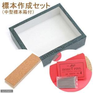 標本作成セット(中型標本箱付き) 昆虫 標本用品 標本セット 関東当日便 chanet
