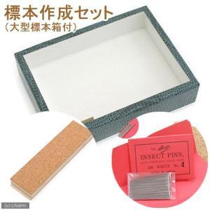 標本作成セット(大型標本箱付き) 昆虫 標本用品 標本セット 関東当日便 chanet