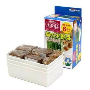 キャティーマン asap 猫の生野菜 6回分 猫草 ドギーマン 関東当日便|chanet