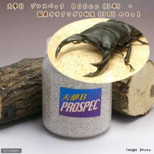 (昆虫)国産オオクワガタ幼虫(3匹) + 菌糸瓶 大夢B プロスペック 800cc 3本 説明書付 本州・四国限定 chanet