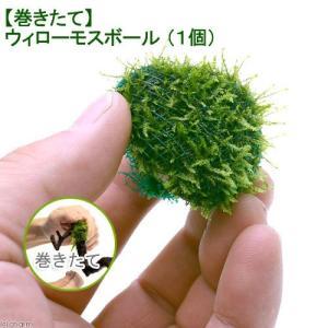 メーカー:草■0〜30 メーカー品番: _wp _aqua 熱帯魚・エビ他 ボール各種 ボール・タイ...