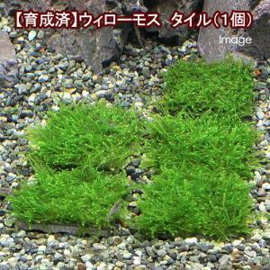 メーカー:草■0〜30 メーカー品番: _wp _aqua 熱帯魚・エビ他 ウィローモス特集 エビ用...