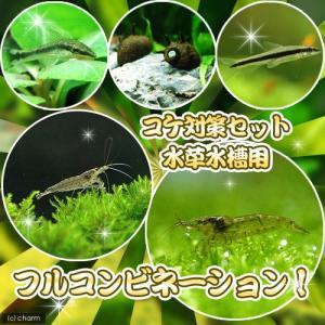 (エビ・貝)コケ対策セット 水草水槽用 フルコンビネーション 北海道・九州航空便要保温