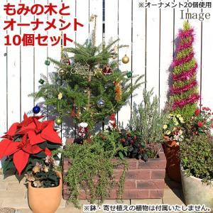 (観葉植物)本物のもみの木 ウラジロモミノキ(長野産)とオーナメント10個のおまけ付き 同梱不可 沖縄別途送料 chanet