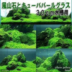 (水草)風山石とキューバパールグラス 30cm水槽用レイアウトセット(無農薬) 熱帯魚 本州四国限定