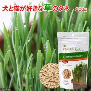 犬と猫が好きな草のタネ 200g 猫草 関東当日便|chanet