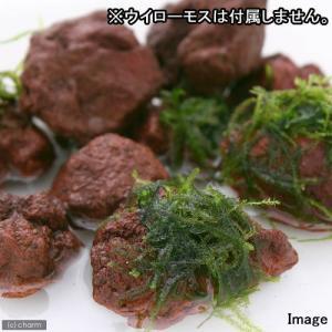メーカー:Leaf Corp メーカー品番: 金魚・メダカ _aqua アクア用品 水槽用アクセサリ...